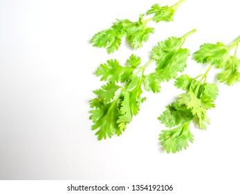 Coriander leaves isolated on a white background