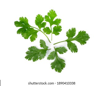 coriander leaves isolated on white background, top view
