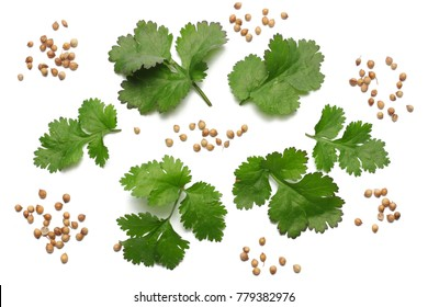 coriander leaves and seeds isolated on white background top view