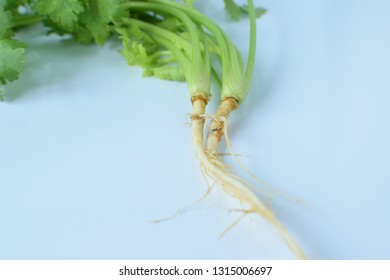 Coriander root placed on a white background