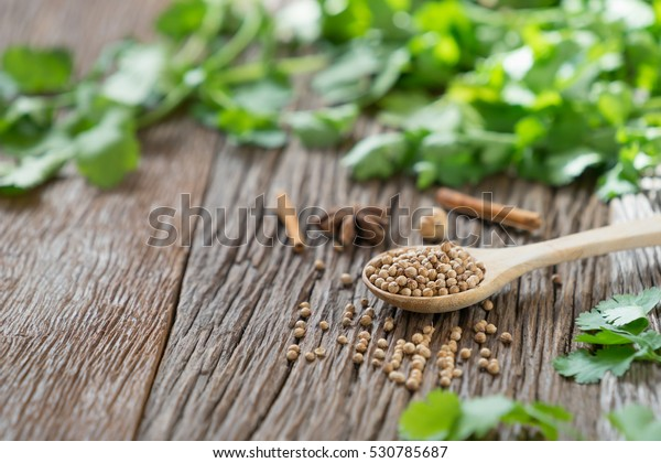 Coriander seed and leaf on wood background with copy space.