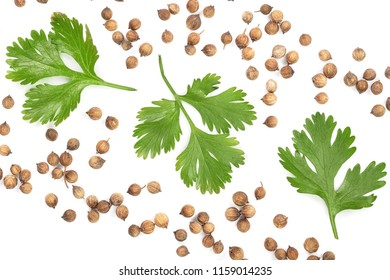 coriander seed and leaves isolated on white background with copy space for your text. Top view. Flat lay pattern