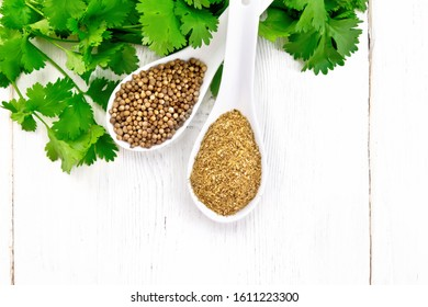 Coriander seeds and ground in two spoons, green fresh cilantro on wooden board background from above
