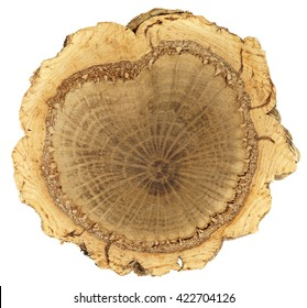 Cork oak, lat. Quercus suber. Three distinct rings of xylem, phloem and a thick ring of outer cork bark showing year rings. The shape of the inner, darker wood resembles the shape of a heart.