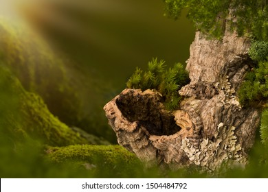 Cork tree bark with a dark hole on moss that can be used as nature backgrounds for fairy photos