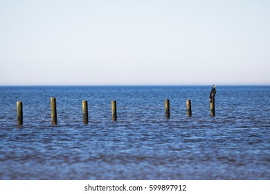 Cormorant bird by the sea.