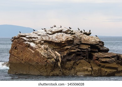 Cormorant bird colony on an island of stone or rock in the Bay of Biscay (Atlantic sea) of Lugo. Galicia. Spain