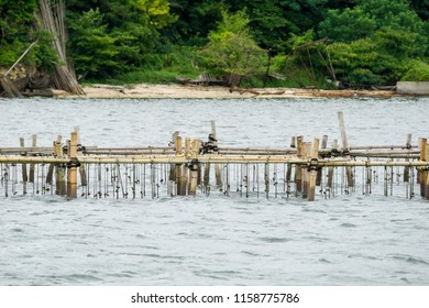 Cormorant Bird in front of a green Island sits on a Bamboo Bridge in Matsushima Japan 2018.