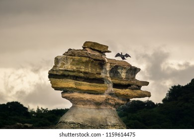 Cormorant Bird with outspread Wings on a Island of Matsushima.