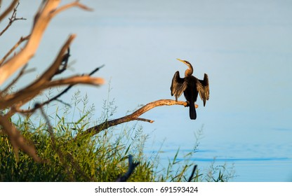 Cormorant drying its wings while sitting in a tree