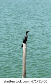cormorant sitting on branch over green lake