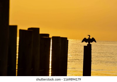 A cormorant sitting on the pilings that divide the North Carolina/Virigina Border at the Outer Banks spreads its wings at sunrise.