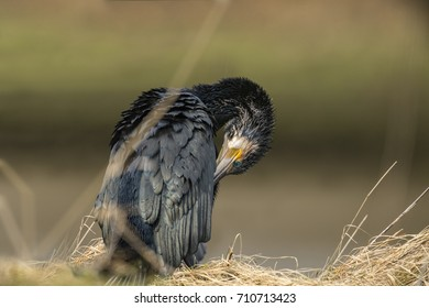 Cormorant standing at the edge of a pond