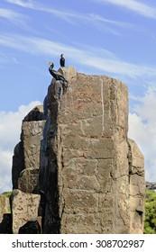 cormorants on a boulder ledge