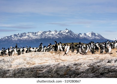Cormorants on isla in Beagle channel