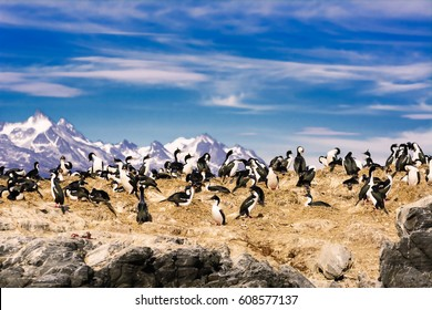 Cormorants on island on Beagle channel