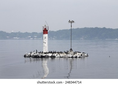 Cormorants on the island of the river