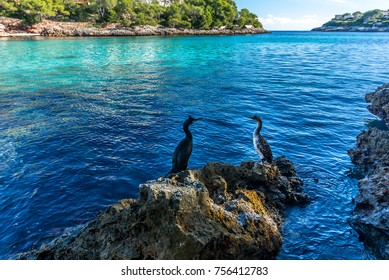 Cormorants in relax after fishing in Majorca coast