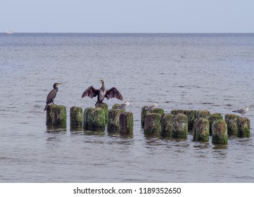 cormorants at the sea on the breakwater