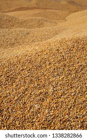 Corn background, heap of corn crop after harvest, selective focus and copy space