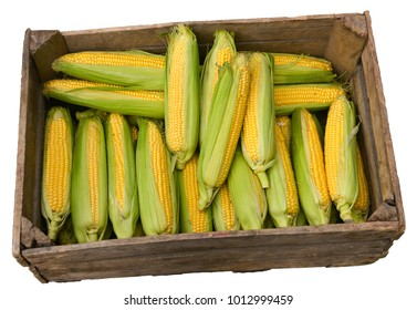 Corn in box isolated on white
