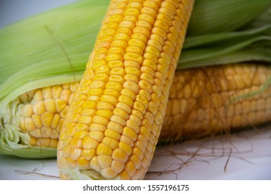 corn close up with white background green cover