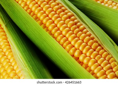 corn cob between green leaves
