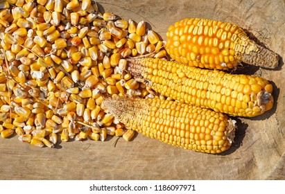 Corn cob and corn seeds