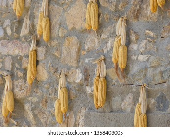 corn cobs drying on a stone wall in a Catalan village