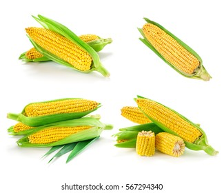 Corn collection isolated on white