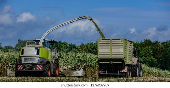 Corn crop, agricultural activity for harvest season