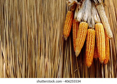 Corn dried grass backdrop