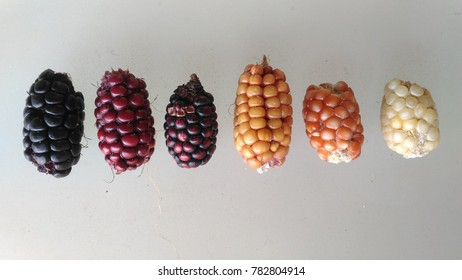 Corn dry kernel with yellow, red, orange, white and purple on a white background, genetics of unusual corn germplasm with diversity different color.
