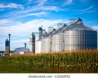 Corn dryer silos standing in a field of corn