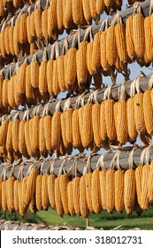 "Corn drying on a traditional Slovenian object, ""kozolec""."