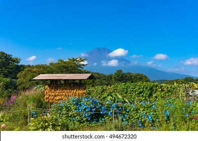 Corn drying rack with Mount Fuji on the background. Japanese rural agriculture scene in Oshino Hakkai heritage village. Japan countryside of Fuji Five Lakes