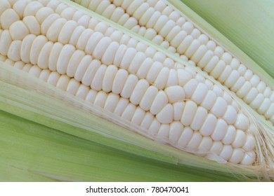 Corn ears close up