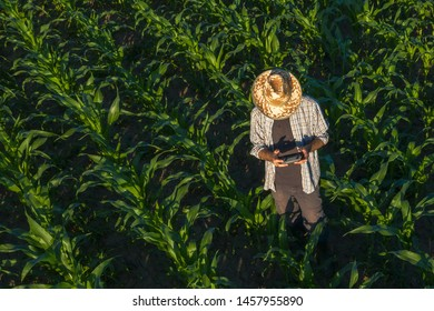 Corn farmer with drone remote controller in field. Using modern innovative technology in agriculture and smart farming.