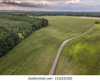 Corn field from above, aerial photography, with road and green meadow and blue sky with dramatic clouds