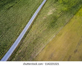Corn field from above, aerial photography, with road and green meadow