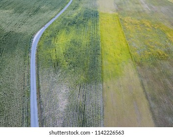 Corn field from above with road, agriculture with meadow