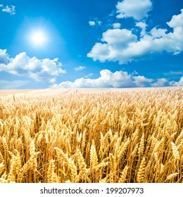 A corn field with blue sky, clouds and sun