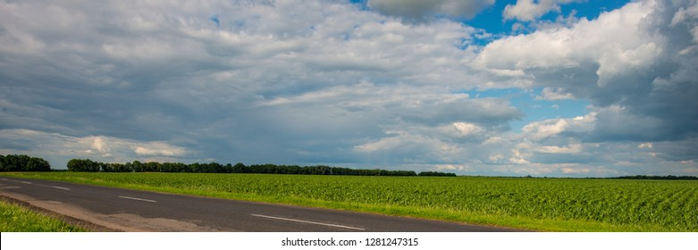 corn field and clouds rural landscape. Summer season. Sunny day. Web banner.
