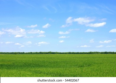 corn field and cloudy sky