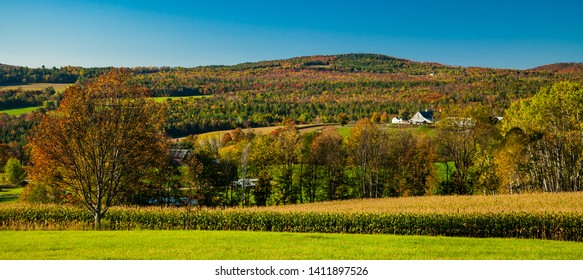A corn field and farm with barn in the rolling hills covered with autumn colors near Stowe, VT