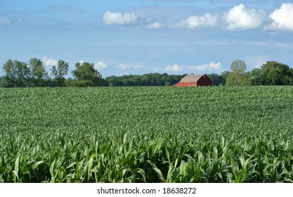 Corn field with farmer's barn in the background.