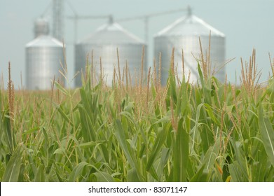 Corn field with grain mill background