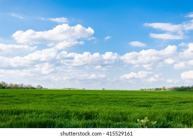 Corn field green grass blue sky cloud cloudy landscape