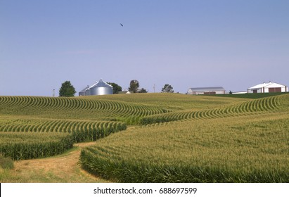 Corn  field in Iowa with blue sky and farm buildings on background