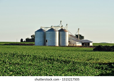 corn field with silo in the background